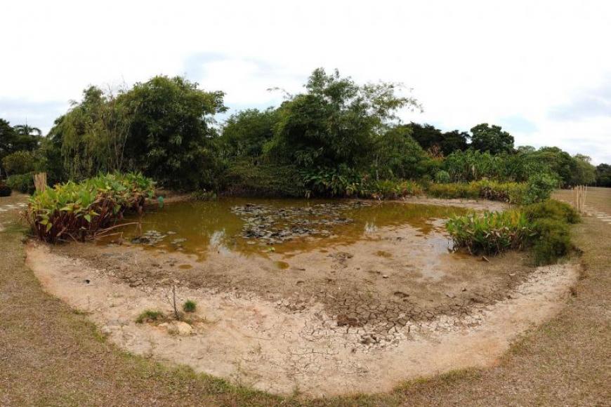 பாசிர் ரிஸ் பூங்காவிலுள்ள இந்த குளம் வற்றிப்போயுள்ளது. முன்பு அந்தக் குளத்தில் அல்லி மலர்கள் நிறைந்திருந்தன. (படம்: ஸ்ட்ரெய்ட்ஸ் டைம்ஸ்)